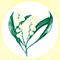 Acacia Pycantha